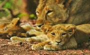 Bhagwan Mahaveer Wildlife Sanctuary
