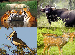 The Mhadei Wildlife Sanctuary